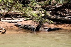 Spotted a crocodile at Sumidero Canyon