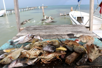 Catch of the day: A few Snappers. Lobsters, an Octopus and some Sweet-lip fish.