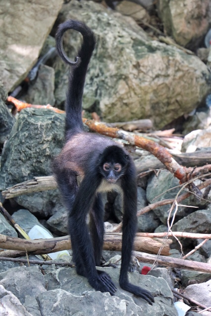 Spotted some monkeys at Sumidero Canyon