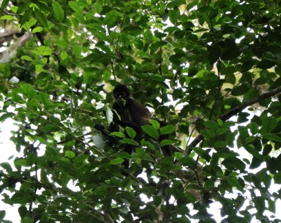 There are monkeys on trees all over the jungle