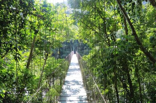 A suspension bridge crossing over the Cangrejal River into Pico Bonito.
