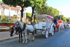Horse drawn carriage in Granada, Nicaragua